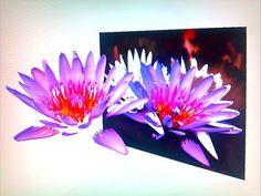Fiji Floral