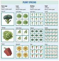 Square Foot Gardening plant spacings