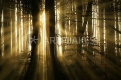"""""""waldlicht II"""" Photography by Norbert Maier buy now as poster, art print and greeting card. Look At The Sky, Canvas Prints, Art Prints, Buy Posters, Sell Your Art, Greeting Card, Trees, Photography, Design"""