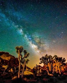 """Cosmic Arena"" by @seanstumblingthrough  Joshua Trees under the Milky Way 