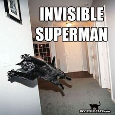 Invisible #cat xD #funny
