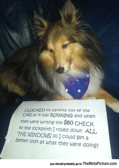 Best Case Of Dog Shaming
