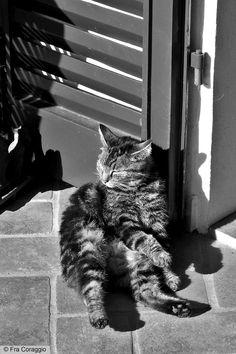 Cat's life - Vita da gatto