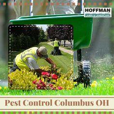 Enjoy better lawns by hiring experts. Experts can also help make lawns healthier. Lawn Fertilizer, Lawn Maintenance, Lawns, Pest Control, Fertility, Home Improvement, Canning, Healthy, Scotts Lawn Fertilizer