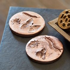Leave an impression when you make these DIY Fossil set for your home decor