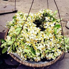 Pomelo flowers - Hoa Buoi