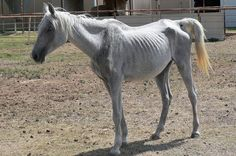 Goal: Aim for the maximum penalty for veterinarian who allegedly had a dozen starved and dehydrated horses, along with several deceased animals, on his property.