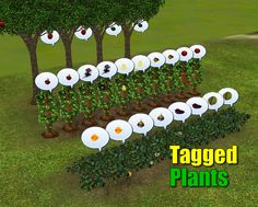 douglasveiga@MTS - Tagged Plants #Sims3