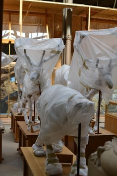 Natural History Museum Oxford - in storage and on show all the same! I love it all the more.