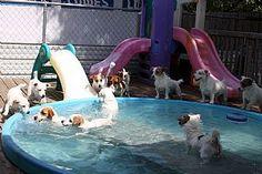 Jack Russell Terrier Breeder on QualityDogs.com