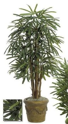 Autograph Foliages W-1540 - 5 Foot Lady Palm Tree - Green * Read more  at the image link.