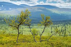 Summer of Finnish Lapland Malli, Lapland Finland, Lappland, What Is Like, Arctic, Wonders Of The World, Travel Photos, Cool Pictures, Tourism