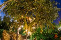 Swiss Family Treehouse in Adventureland at the Magic Kingdom via Flickr | Pinned by Mousefan in a Minivan | #disney #wdw #disneyworld #magickingdom #parks #adventureland #swissfamilytreehouse #attraction #ride #photography #florida #orlando #vacation #travel