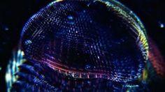 "Sprint ""Dream II"" on Vimeo"