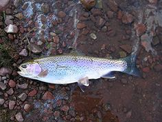 Springtime fishing tips from an aquatic biologist