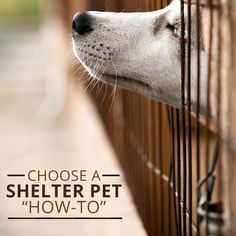 How to Choose a Shelter Pet!