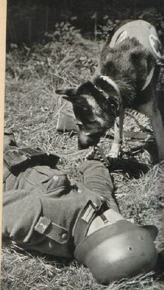 "This photo was taken from a German magazine published in June 1941. The headline is ""Kriegshunde"" (Dogs of War), while her own picture caption entitled ""Dogs of war find a wounded soldier"""