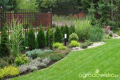 Ogród amatora - proszę o pomoc - strona 3 - Forum ogrodnicze - Ogrodowisko Landscaping Along Fence, Backyard Landscaping, Amazing Gardens, Beautiful Gardens, Privacy Plants, Beautiful Flowers Garden, Garden Cottage, Garden Landscape Design, Garden Inspiration