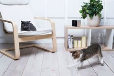 This Petcube Interactive Wi-Fi Pet Camera lets pet owners view their pets through their smartphone from anywhere with HD clarity. It has a microphone and speaker so you can speak to your pet. It's laser-pointer toy lets you play with your animal remotely. Live For Yourself, Traveling By Yourself, Pet Ball, Pet Camera, Camera Watch, Cat Exercise, Interactive Cat Toys, What Cat, Ways To Show Love