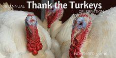Thank the Turkeys 2016, website graphic