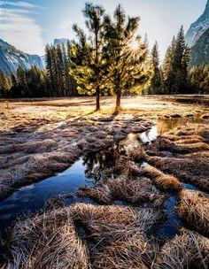 Twins at Sunset by David Soldano....  #trees #sky #forest #beauty #sunset #water #travel #blue #sun #light #clouds #tree #beautiful #grass #green #rays #grassland #burst #wanderlust #Yosemite #California