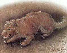 Earth Hound- Scottish cryptid: a small, furry creature described to have a hound-like face, bushy tail, mole claws, and large incisors. they burrow underground and feed on corpses.