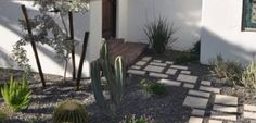 Cacti and path