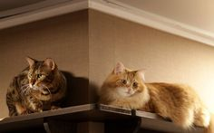 Cats, Couple, Sitting Shelf hd wallpaper by depzai Cat Couple, Cat Run, Cat Sleeping, Cat Wallpaper, Cat Life, Pet Care, Cats Of Instagram, Cat Lovers, Kitten