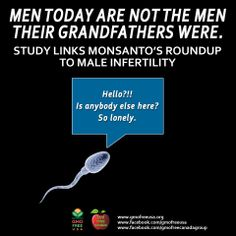 Study: Roundup Disrupted Male Reproductive Functions By Triggering Calcium-Mediated Cell Death In Rat Testis And Sertoli Cells. TRANSLATION? MONSANTO'S ROUNDUP IS LINKED TO MALE INFERTILITY.  READ: http://sustainablepulse.com/2013/07/18/monsantos-roundup-to-blame-for-worldwide-male-infertility-crisis/  LINK TO STUDY: http://gmoevidence.com/dr-cattani-roundup-causes-infertility-in-rats/