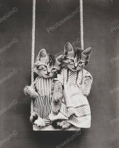 Original vintage old photos reproduced into contemporary prints. All photographs are chemically processed in photo labs and in great condition. Kittens Swinging 8x10 Reprint Of Old Photo Kittens Swing