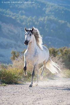 Фотосъемка лошади, съемка лошади индивидуальная