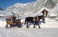 http://www.grossarlerhof.at/en-horsedrawn-sleighrides.htm Horse-drawn Sleigh Rides