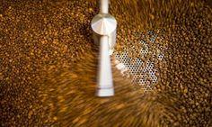 Produtores de café apostam na exportação de grãos especiais