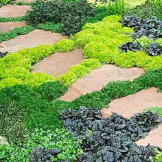 Sélection des 10 meilleures plantes tapissantes pour créer des allées végétalisées et naturelles dans votre jardin
