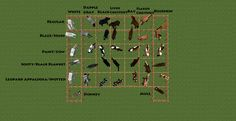 Differrent Minecraft horse breeds.