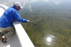 Underwater 'zombie grass' signals trouble for Florida fishermen