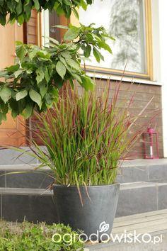 Ogród tworzę nowoczesny czyli wewnętrzna walka jak nie zostać kokoszką :) - strona 1124 - Forum ogrodnicze - Ogrodowisko