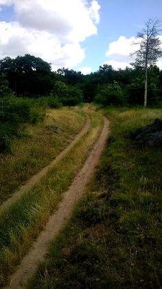 ösvény