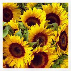 Girasol Cut Flowers, Pretty Flowers, Wild Flowers, Beautiful Flowers Pictures, Flower Pictures, Sunflower Bouquets, Ornamental Plants, Vintage Flowers, Beautiful Gardens