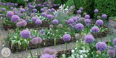 Ágyásszegély , Kerti szegély, Ágyásszegély virág vagy növény ágyáshoz. Ez a praktikus ágyásszegély erős fűzfaágakból készült és 100%-ban természetes termék!             Figyelem! 5 darabos kiszerelésben rendelhető! Az ágyásszegélyekkel külön-külön ágyakat különíthetnek el egymástólpl.virágágyások, gyalogutak , zöldségágyások , gyógynövény és gyepesített területek, ezáltal szép, rendezett hatást ad kertjének. Ezzel egyidejűleg a kert optikai elhatárolását is szolgálja. Az… Outdoor Decor, Plants, Gardens, Sweet, Candy, Outdoor Gardens, Plant, Garden, House Gardens