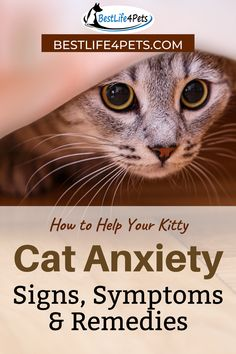 Anxiety isn't just for people, pets could get it too. Like cats, these creatures are capable of having it too. Learn more about signs of cat anxiety and how you can help your cat. Animals And Pets, Funny Animals, Cute Animals, Anxiety Cat, Cat Enclosure, Feral Cats, Cat Behavior, Cat Facts, Cat Health