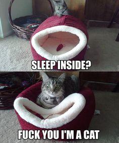 Cat logic