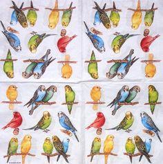 【楽天市場】オランダ製の 可愛い4つ折り ペーパーナプキン☆ インコ 鳥 ☆(BIRDIES)(20枚入り):Pippy 楽天市場店