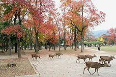 Nara park.