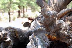 At Sunset Crater National Monument, Arizona  2008 Nikon D60