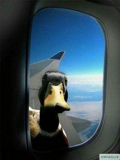 Guten Flug,Ente