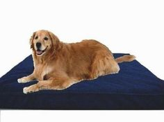 """Extra Large 40""""X35""""X4"""" Orthopedic 100% Memory Foam Pad Pet Bed for Large Dog with long lasting denim cover + Waterproof case + Free Bonus Cover by dogbed4less, http://www.amazon.com/dp/B001E3EC9M/ref=cm_sw_r_pi_dp_iBfbrb04RETBG"""