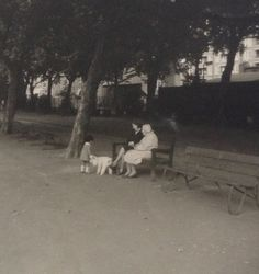 60's London park and poodle
