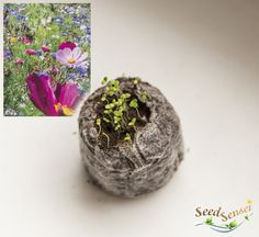 Flowers for bees growing kit colorful flowers for by TheSeedSensei