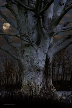 Haunting - Click image to find more Holidays & Events Pinterest pins